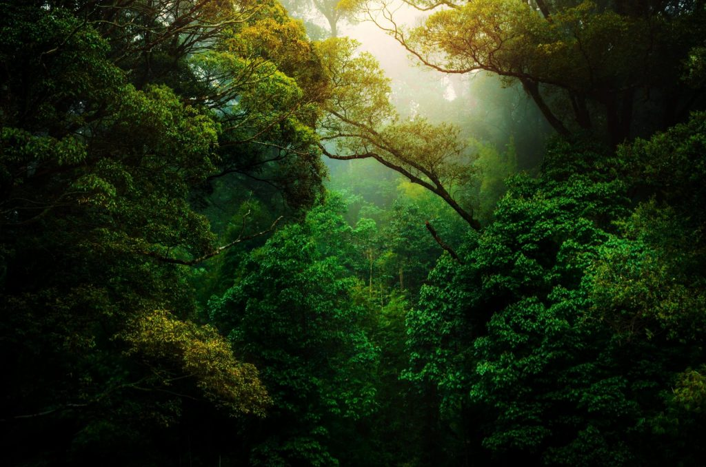 Rainforests featured image